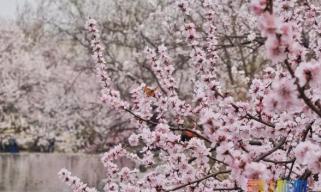 这个春天不可错过的赏花活动都开始啦!