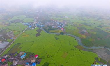 Autumn scenery of fields in south China's Guangxi