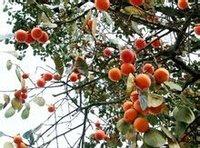四明山植物