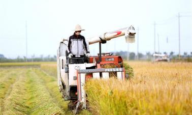 Rice harvested in east China's Jiangsu