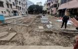 宁波这个老小区搞车位改造把很多树木拔光 居民怒了