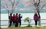 """""""樱""""你而来 2019中国·无锡太湖鼋头渚国际樱花节启动"""