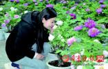"""曹州牡丹园4月1日""""装盛""""旅之化文花场一赴共 园开"""