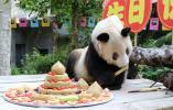 世界现存最年长大熊猫迎来37岁生日,拥有137只后代
