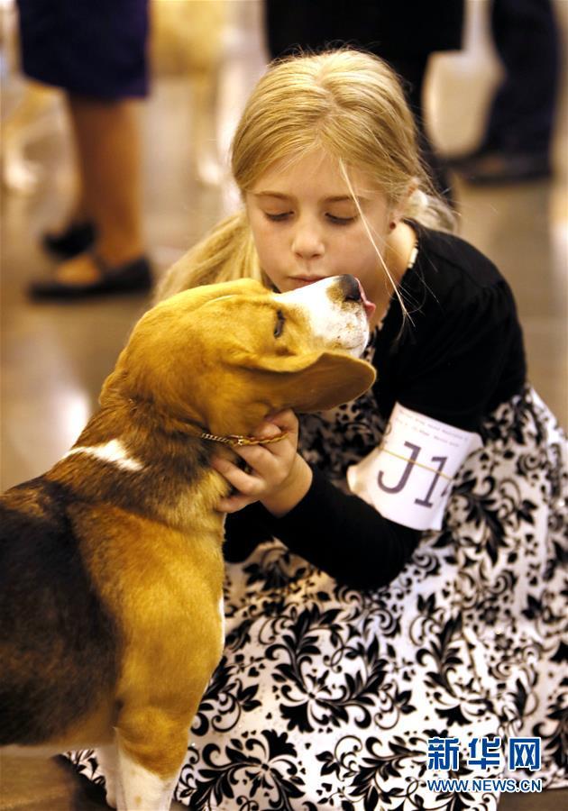 休斯敦举行第42届宠物狗展