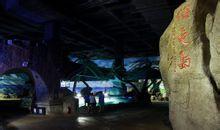泉城海洋极地世界海龟岛