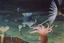 奇特的海底景观和固著底栖生物群落