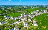 平湖新仓聚焦生活美 实施美丽城镇服务提升行动