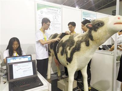 可穿戴奶牛呼吸频率测量仪