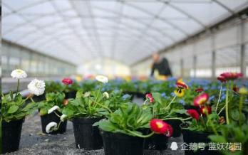 为什么花市买的花没几天就死了?新买的花该怎么养?