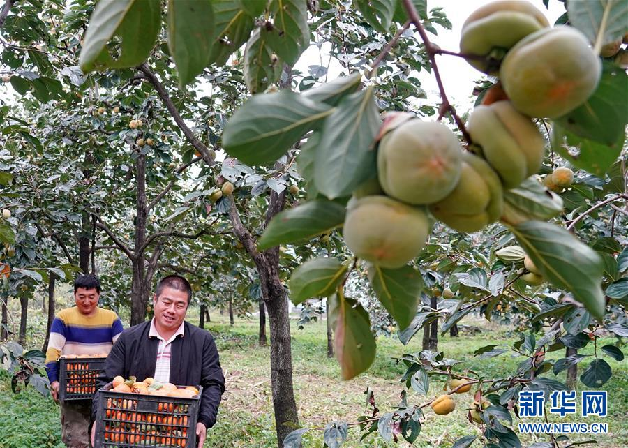 河北顺平:推进特色林果产业发展