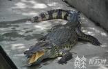 涉及梅花鹿、鸵鸟、暹罗鳄等物种 江苏91个人工繁育行政许可依法撤回