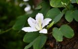 一起去校园看花!温州大学首进中国大学校园植物排行榜