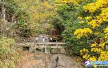 【蜂之眼】秋黄杭州建德大慈岩(每日一景)