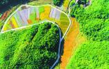 庆元岭头:建立农业示范基地 助力乡美丽城镇建设