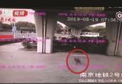 """野猪闯进南京地铁站 早高峰""""凑热闹""""被赶跑"""
