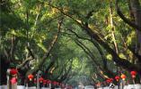 """第十届""""引凤工程""""南邮分论坛在南京邮电大学开幕!来自世界一流大学和科研机构的100多位海内外优秀青年学者参加活动"""