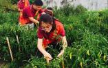 厉害了,江干区这些学校的劳动教育全省榜上有名