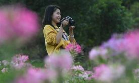 In pics: flowers at Kongyuan Village in SE China's Fujian