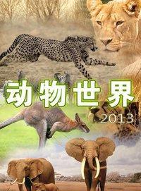 动物世界 2013